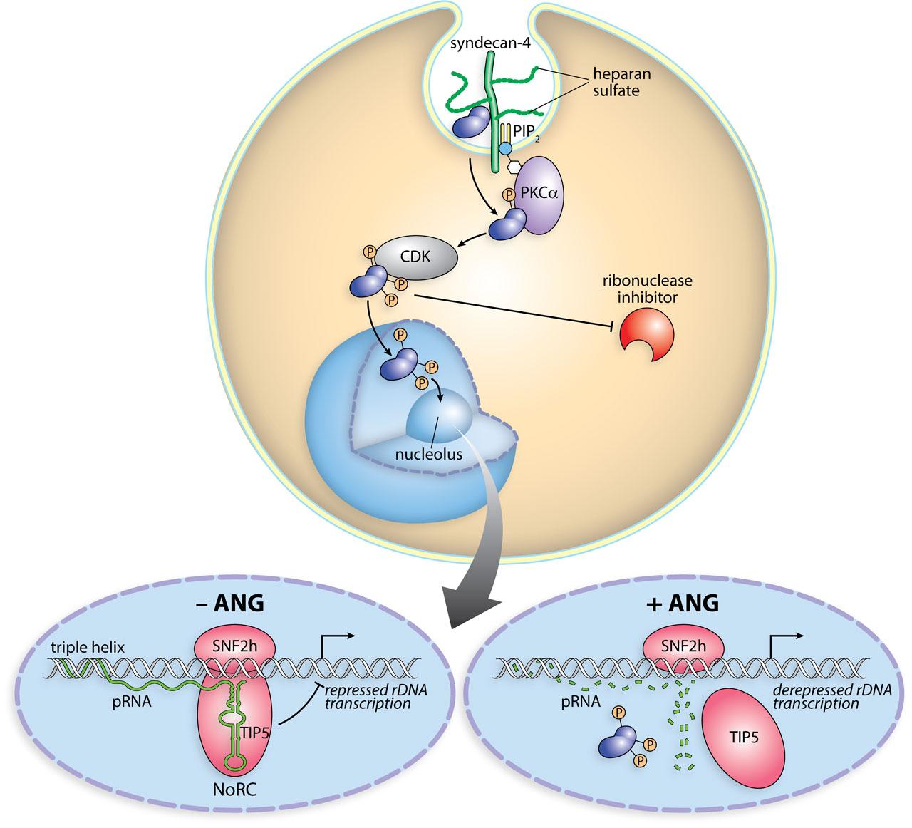 biology_image_2
